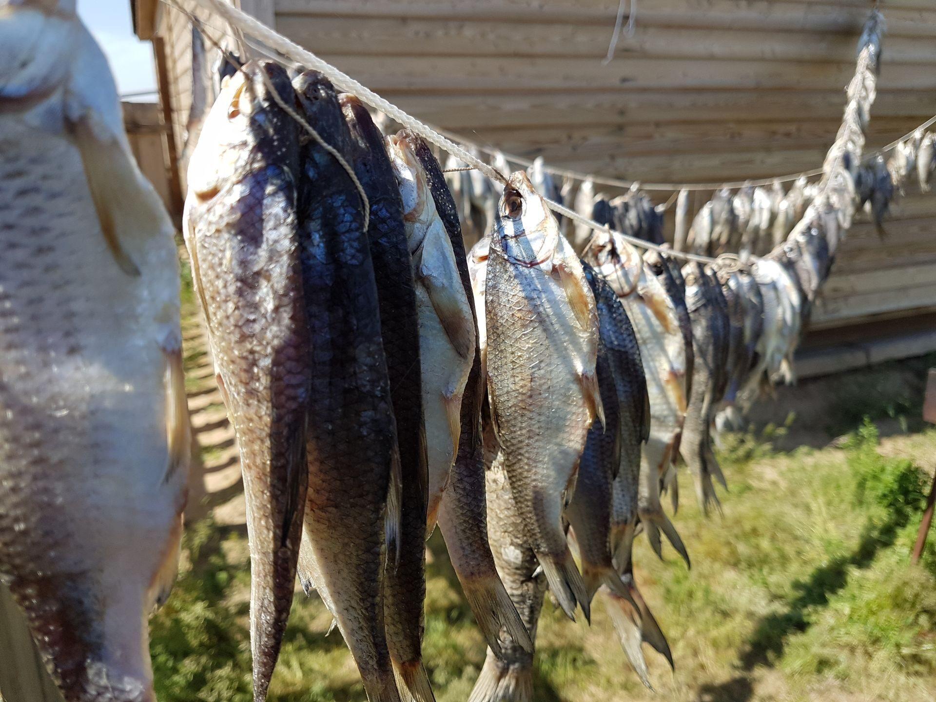 Рыбалка на ямах волги