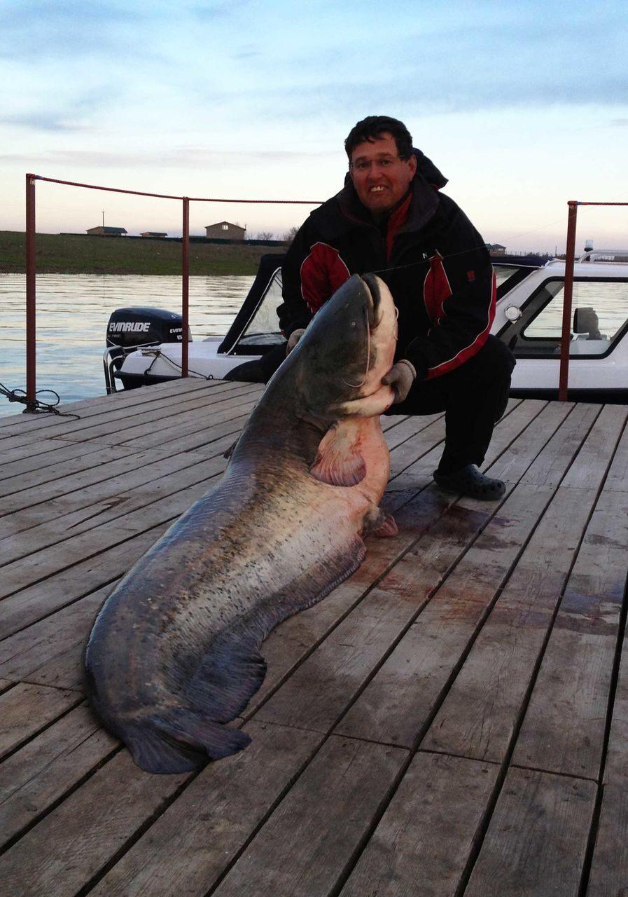 рыбак в тольятти поймал сома