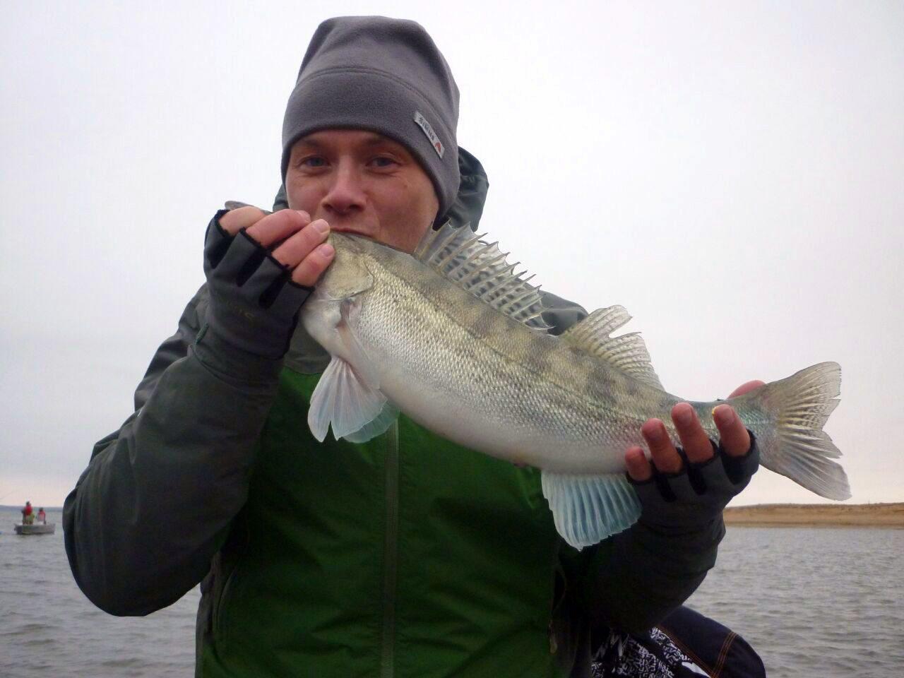 ловля судака отчеты о рыбалке