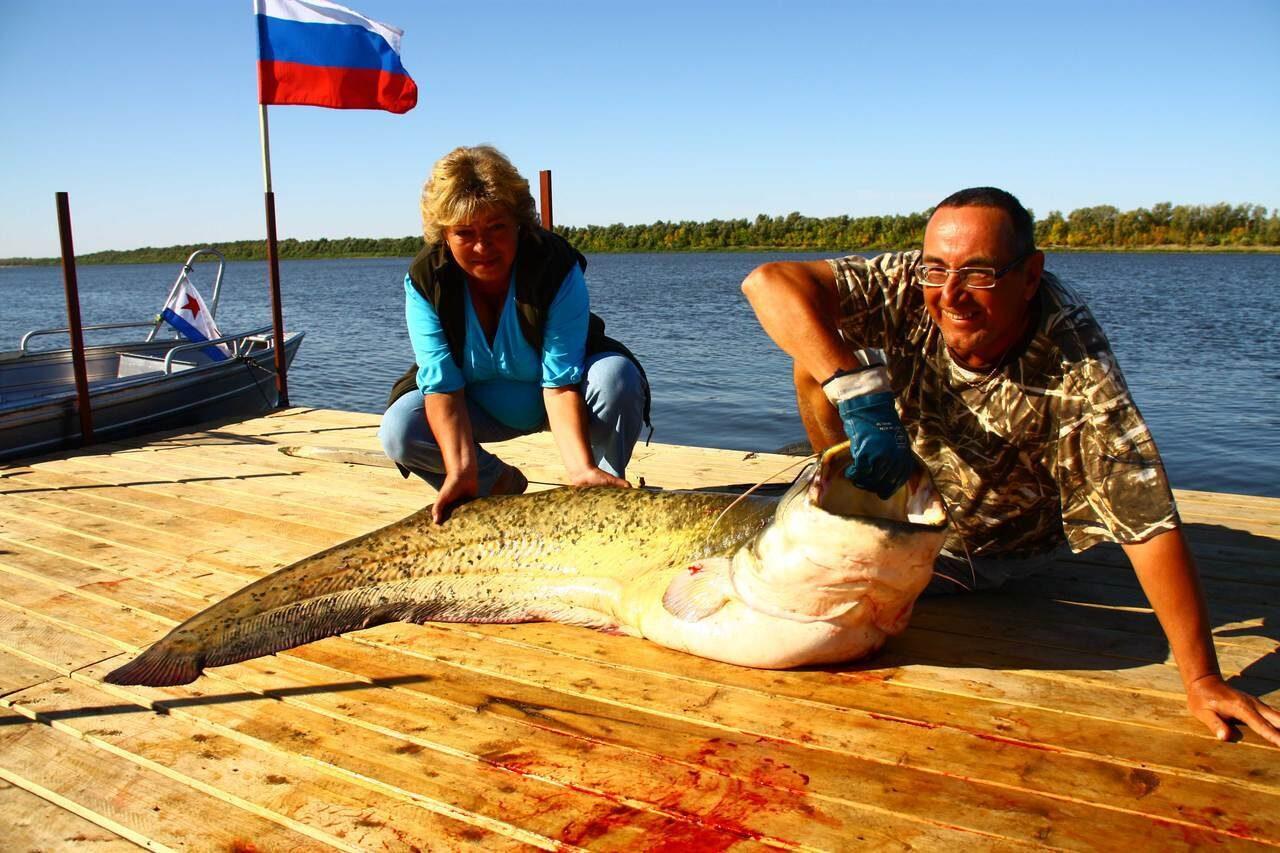ловля сома в ставропольском крае